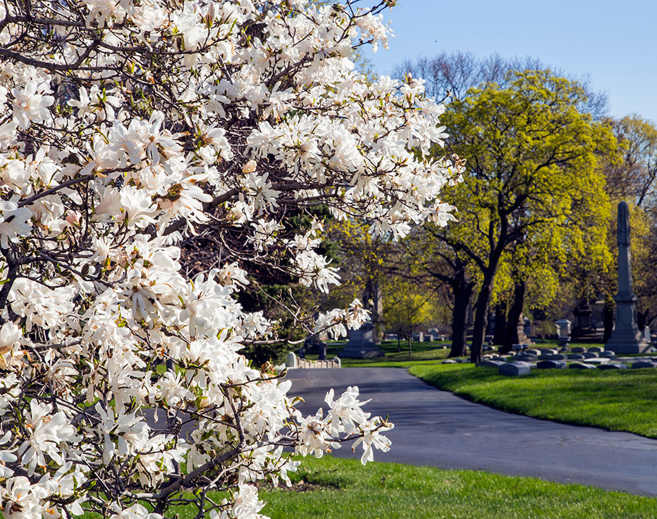 Graceland-Landscape-Crab-Apple-tree---road.jpg